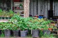 Quelques récoltes des Jardins Lakou.