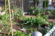 Jardin potager de l'école Garneau