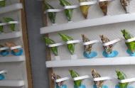 Serre d'élevage de papillons