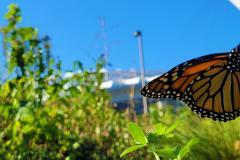 Les jardins favorisent-ils la biodiversité?