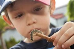 Activité éducative à l'Insectarium © Espace pour la vie (Michel Tremblay)