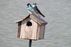 Oiseaux sur une cabane © Jardin botanique de Montréal (Gilles Murray)