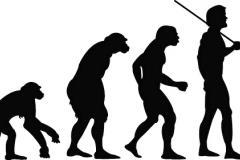 Illustration de l'évolution de l'homme
