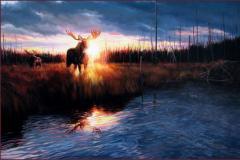 La lumière en héritage – Orignaux – Huile sur toile de Gisèle Benoit