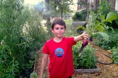 Récolter dans sa cour… d'école!