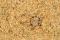 Tête de la larve et mandibules au fond du piège