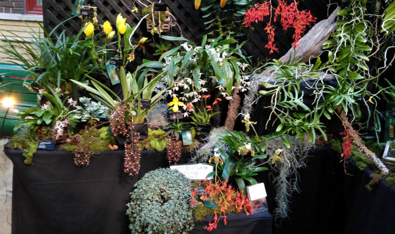 Orchidexpo 2017 le jardin botanique se distingue for Biodome insectarium jardin botanique