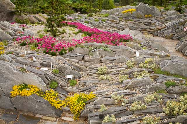 Cultivating alpine plants for rock gardens space for life for Biodome insectarium jardin botanique