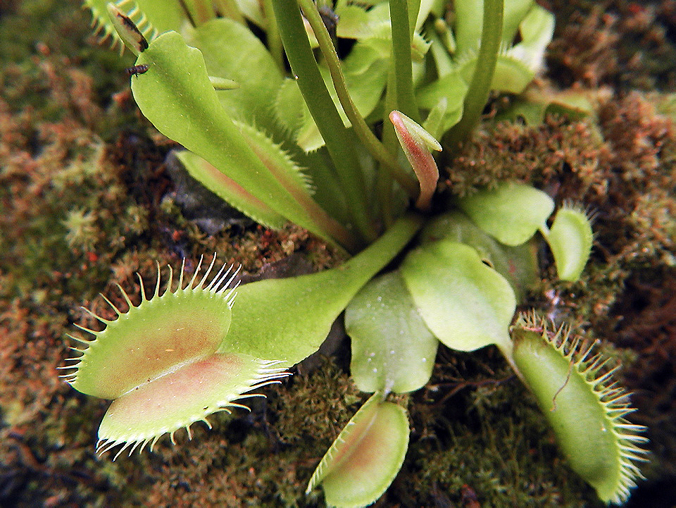 Dionaea space for life for Biodome insectarium jardin botanique