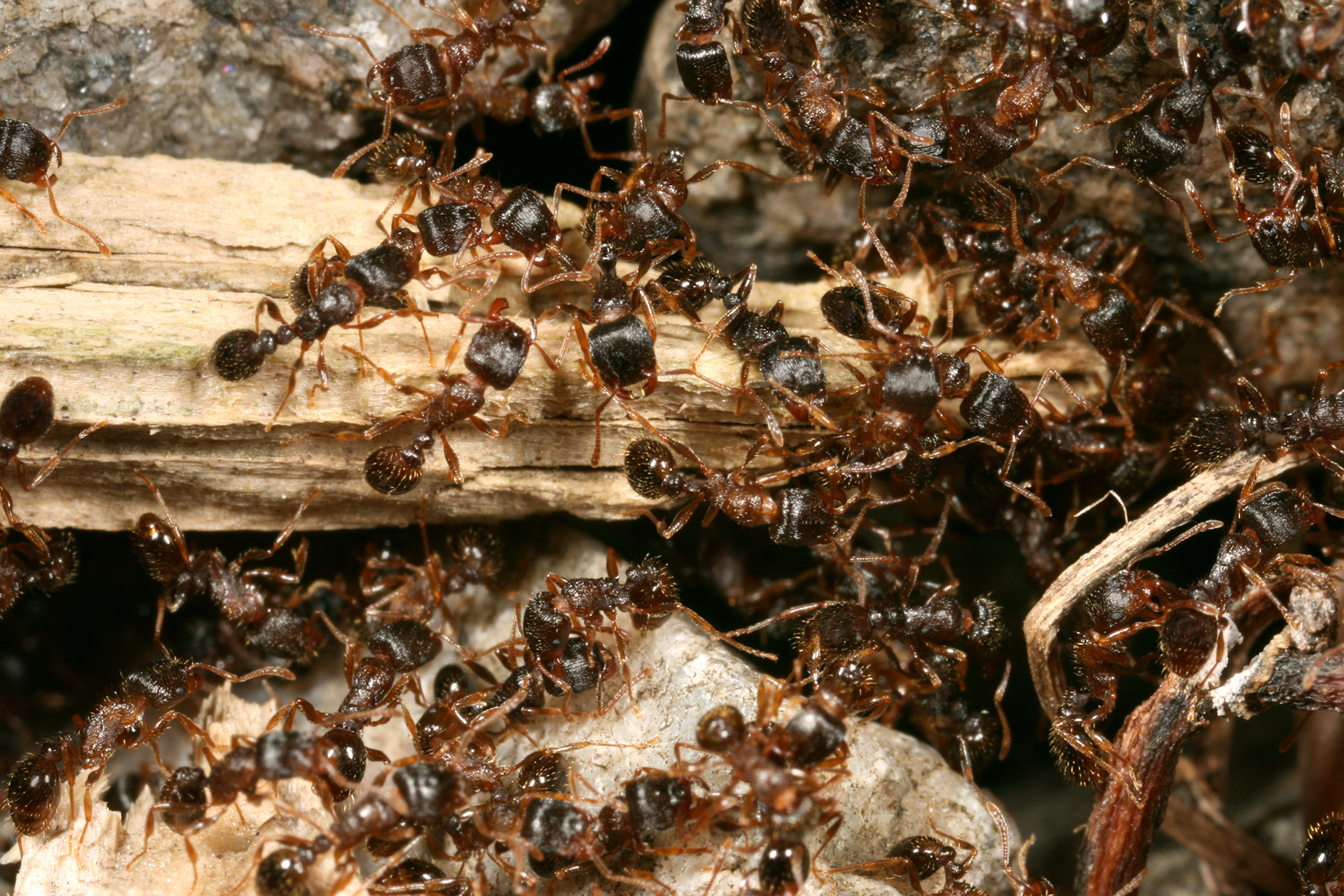 Finding An Ant Nest Space For Life