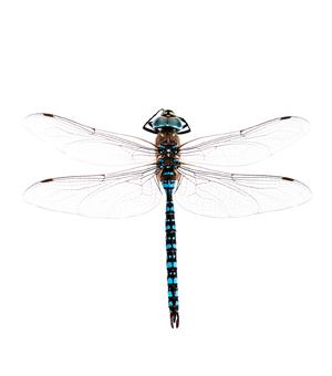 Les insectes aquatiques | Espace pour la vie