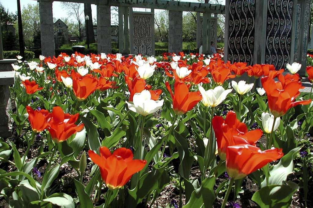 Jardin de la paix espace pour la vie for Planificateur jardin