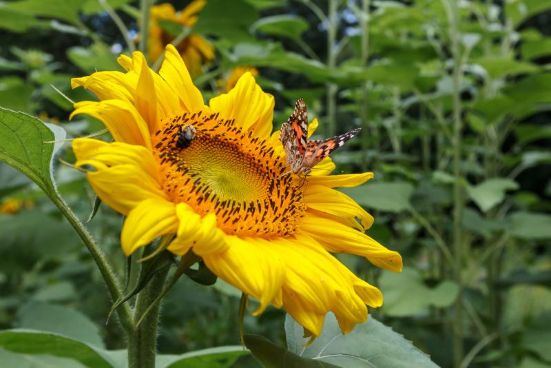 Jardin nourricier espace pour la vie for Planificateur jardin