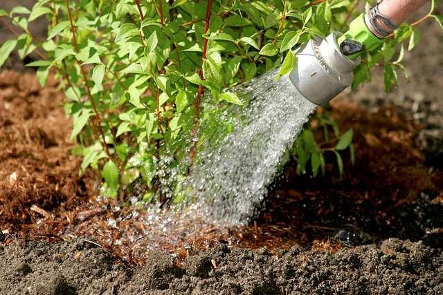 l 39 irrigation au jardin espace pour la vie. Black Bedroom Furniture Sets. Home Design Ideas