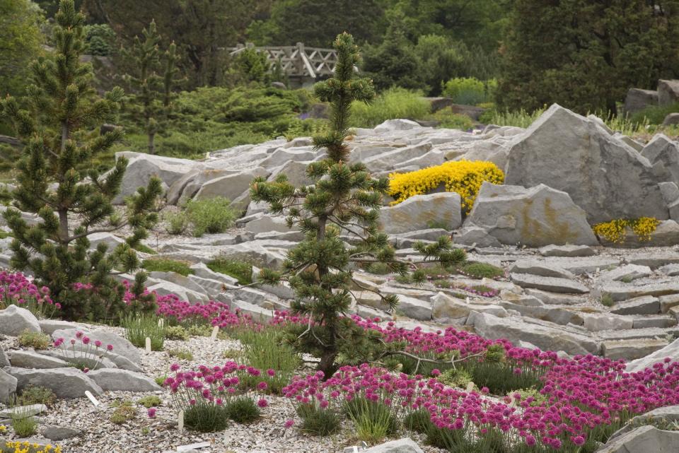 Jardin alpin espace pour la vie for Planificateur jardin