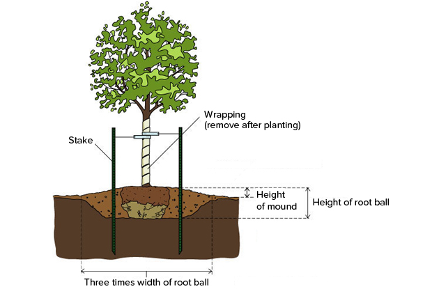 Planting in poorly drained soil space for life for Technique piscine systeme