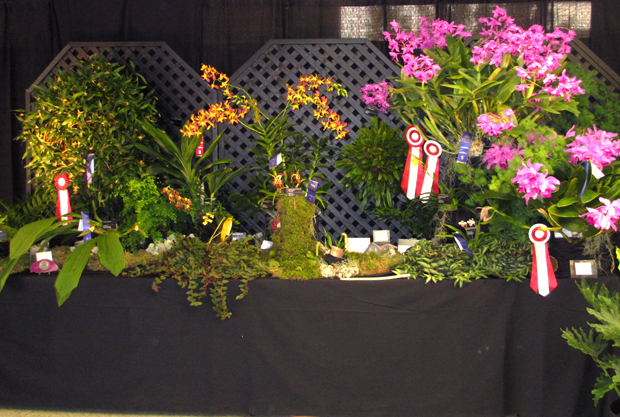 The botanical garden s orchids win big at orchidf te for Biodome insectarium jardin botanique