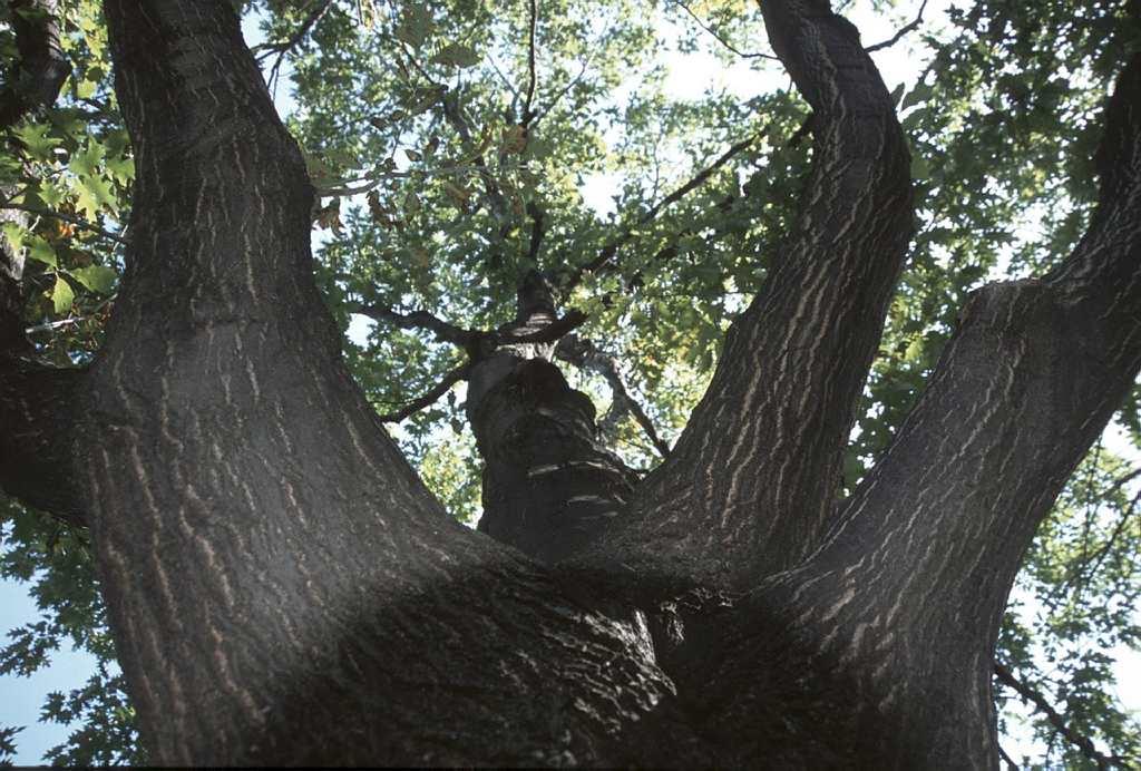 Plantation des arbres et des arbustes espace pour la vie for Planificateur jardin