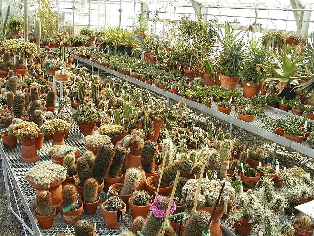 Coulisses du jardin botanique espace pour la vie for Planificateur jardin