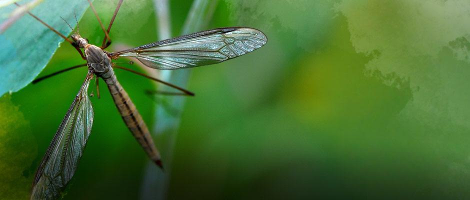 Bannière saisons - Biodiversité
