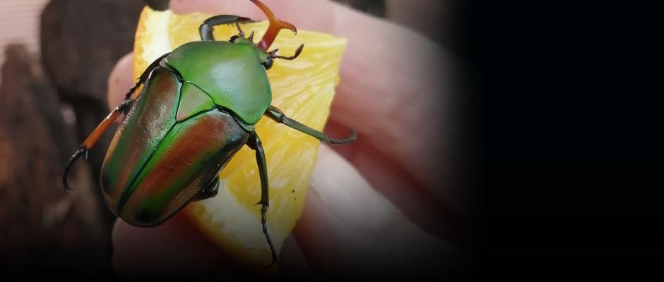 Rearing insects!