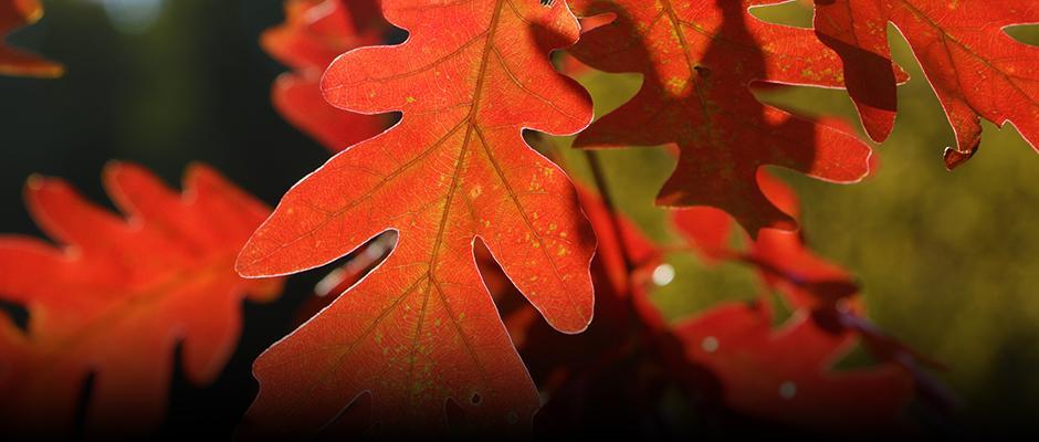 Pourquoi les feuilles changent-elles de couleur à l'automne?