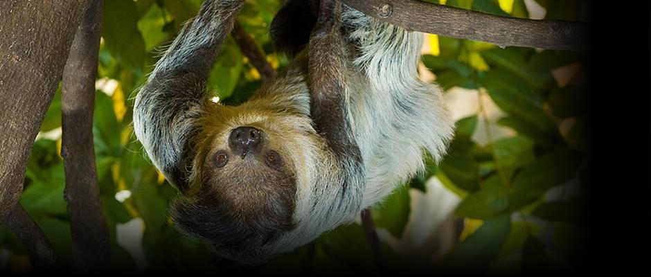 Plus de 2 500 animaux à découvrir