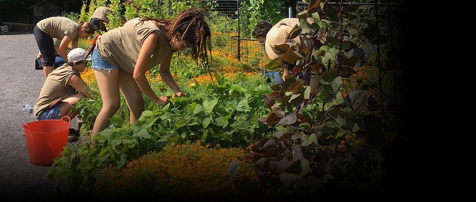 Les légumes à privilégier en temps de crise