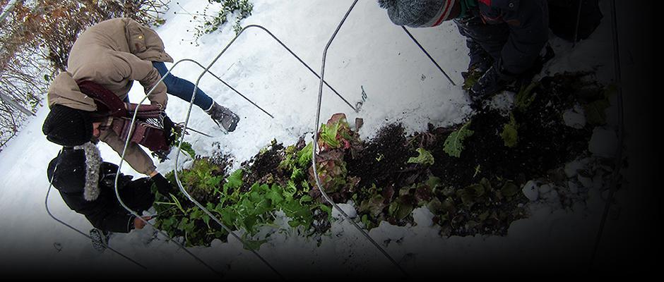 Jardinez-vous par temps froid?