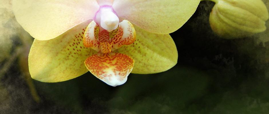 Collections du Jardin botanique