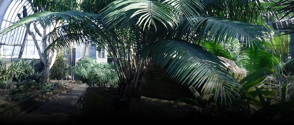 Dans les coulisses du Jardin - Carrousel