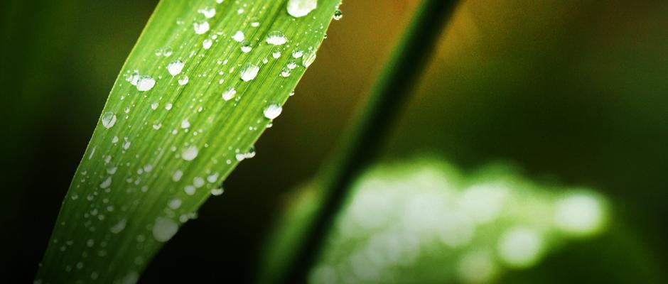 Développement durable à Espace pour la vie