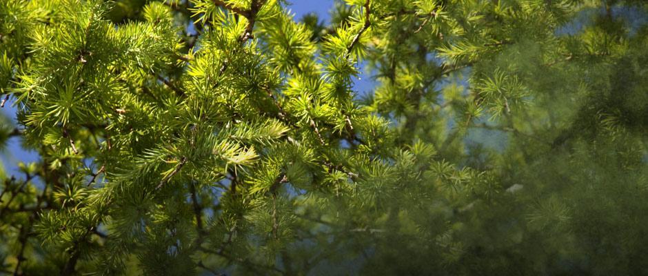 distribution-arbres-jbm-mt0039453.jpg