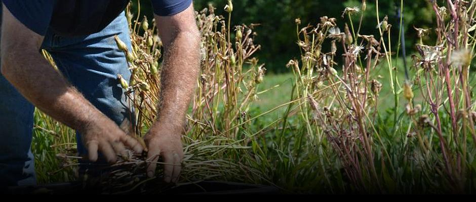 Petit lexique pour le choix de vos semences - Carrousel - fr
