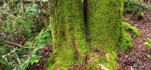 Mousse sur tronc d'arbre