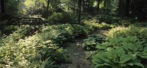 Jardin du sous-bois