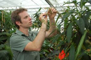Pollinisation manuelle de plantes dans les serres du Jardin botanique.