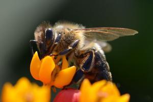 Découvrez comment les insectes survivent à l'hiver