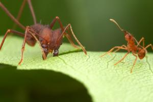 The Ant Fortress