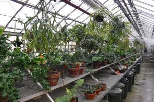 La phytoprotection dans les serres du Jardin botanique: être l'ange gardien de milliers d'espèces