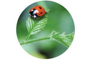 Jardin pour la biodiversité