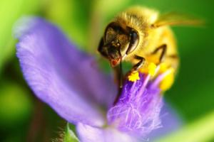Biodiversity garden