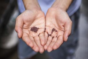 Précieuses semences