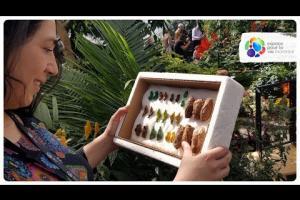 Le métier de coordonnatrice d'activités en loisirs scientifiques à l'Insectarium de Montréal