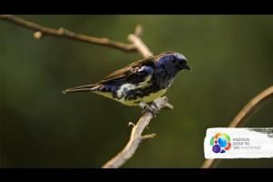 Les oiseaux du Biodôme / Birds at the Biodôme