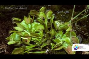 How do carnivorous plants feed themselves?