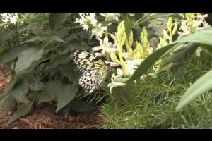 Papillons en liberté 2014 - Butterflies Go Free 2014