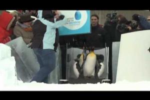 La sortie des manchots du Biodôme - Nuit blanche 2012