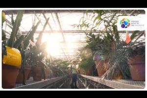 La phytoprotection dans les serres du Jardin botanique