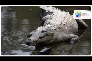 Are the caimans at the Biodôme real?